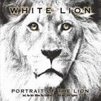 White Lion - Portrait Of The Lion